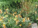 botanischer-garten-2.jpg